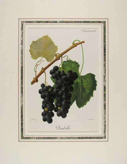 mat-isabelle-grapes-mat